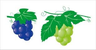 winogrona wiązek royalty ilustracja