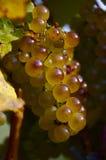 winogrona wino Fotografia Royalty Free