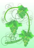 winogrona winorośli ilustracja wektor