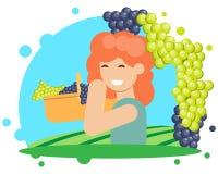 Winogrona zbierać Obraz Stock