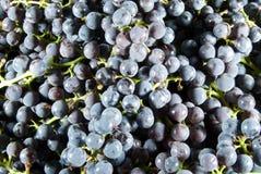 winogrono zdjęcia stock