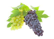winogrono błękitny zieleń zdjęcie royalty free