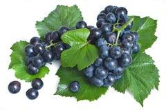 winogrono czarny liść Zdjęcie Royalty Free