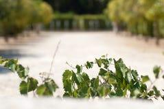 Winogrono gałąź obrazy stock
