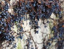 Winogrono i ściana zdjęcia stock