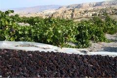 winogrono kapadokian Zdjęcie Stock
