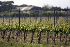 Winogrono krajobraz Fotografia Royalty Free
