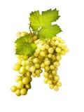 winogrono liść Fotografia Royalty Free