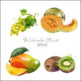 Winogrono, melon, mango, kiwi Obrazy Stock