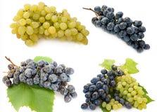 winogrono mieszający Fotografia Royalty Free