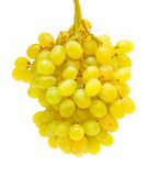 winogrono odizolowywający Obrazy Stock