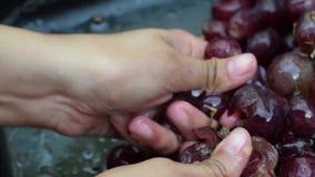 Winogrono owoc stwarzają ognisko domowe wino przetwarza gruntownego miażdżenie owoc z młodymi żeńskimi nagimi rękami zdjęcie wideo