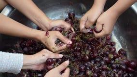 Winogrono owoc stwarzają ognisko domowe wino przetwarza gruntownego miażdżenie owoc z wiele młodymi żeńskimi nagimi rękami zbiory
