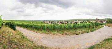 Winogrono śródpolna panorama Fotografia Stock