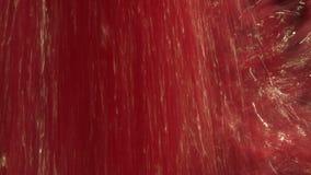 Winogrono w fermentacja zbiorniku zdjęcie wideo