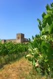 winorośl krajobrazu fotografia stock