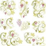 winorośl motywy Obrazy Royalty Free