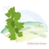 Winorośli i winogron grona ilustracja wektor