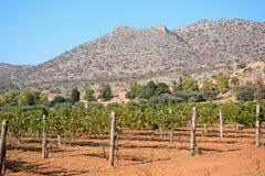 Winorośle Agia Triada monasterem, Crete Zdjęcia Stock