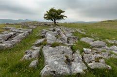 Winskill lapide la réserve naturelle Image libre de droits