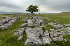 Winskill Stones Nature Reserve Royalty Free Stock Image