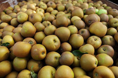 Winsor apples Stock Photography