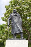Winston Churchill. The statue of Winston Churchill in Parliament Square in London in front of a blossoming chestnut tree Royalty Free Stock Photos