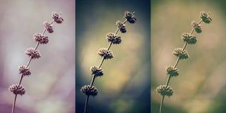 Wintage collage av härliga lösa blommor fotografering för bildbyråer