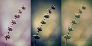 Wintage collage of beautiful wild flowers Stock Image