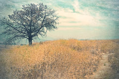 Wintage landscape wiht tree Royalty Free Stock Images