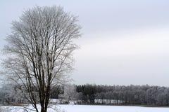 Winter湖和森林 免版税图库摄影
