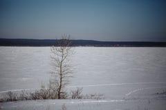 Winter湖在森林里 免版税库存图片