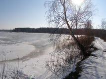 Winter湖 在岸的桦树 库存图片