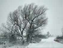 winter сельский Стоковые Изображения RF