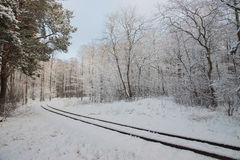 winter сельский Красивая железная дорога узкой колеи через снежные деревья Стоковые Фото
