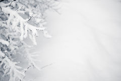 Free Winter Stock Image - 10358571