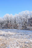 Winter. Stockfoto