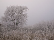 Winter. View in a park in the netherlands Stock Image