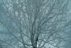 Winter. Snowy tree Stock Images