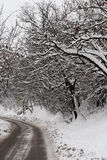 Winter. This is a forest in winter, with lots of snow on the tree branch, and the road Stock Photos