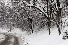 Winter. This is a forest in winter, with lots of snow on the tree branch, and the road Royalty Free Stock Photo