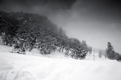 Winter. Snow covered Rothiemurchus area of the Scottish Highlands Royalty Free Stock Image