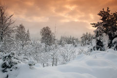 Winter. Snow covered Rothiemurchus area of the Scottish Highlands Royalty Free Stock Photography
