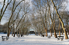 Winter. Rows of trees in snow stock images