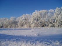 Winter. Forest in winter in Estonia Stock Photo