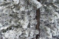 Winter 14 Stock Image