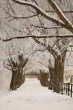 Winter. A snowy path with trees Royalty Free Stock Image