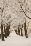 Winter. A snowy path with trees Royalty Free Stock Photography