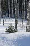 Winter. Snow cold outdoors scene Stock Images