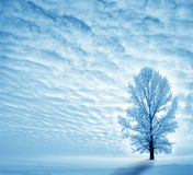 Winter. Landscape with lonely tree Stock Photography
